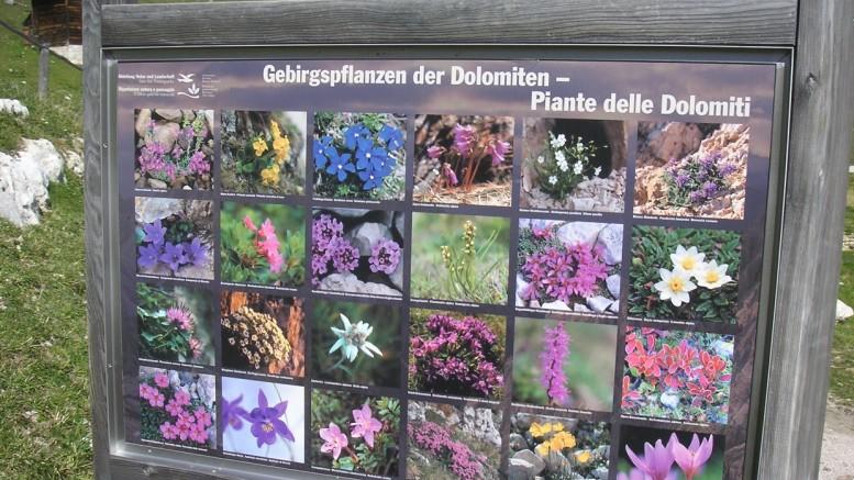 Les plantes y i ciufs dles Dolomites ne ciafa degun inom ladin sun les tofles di parcs.